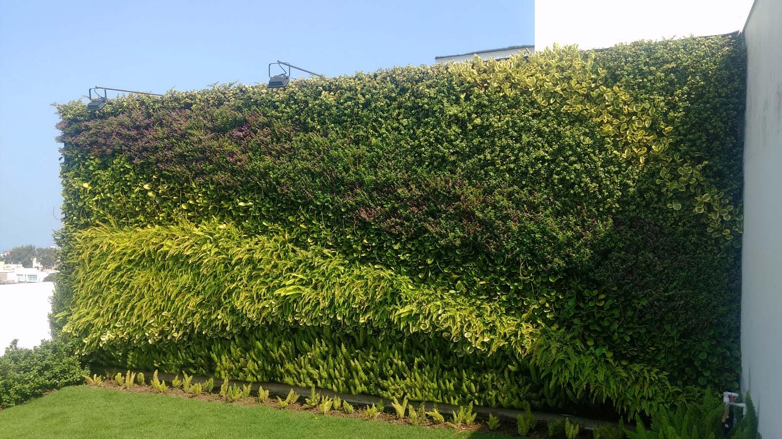 Jardin vertical y techo verde en san isidro for Jardin verde